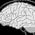 築山節『いくつになっても脳は磨ける』